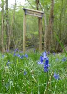 Bluebells & sign in Spring