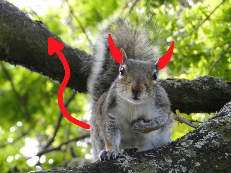 Horned squirrel