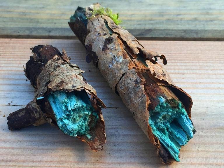 Blue-green wood