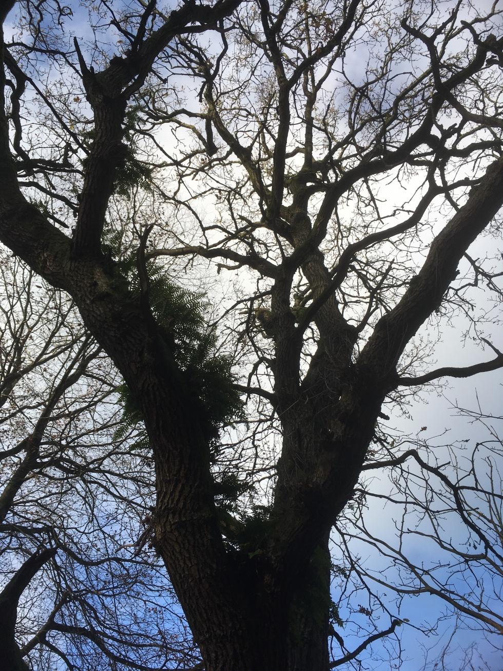 Aerial ferns